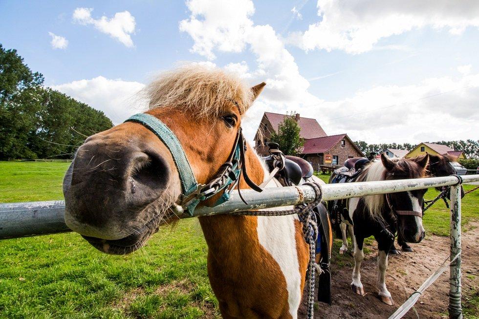 Pony zum Anfassen