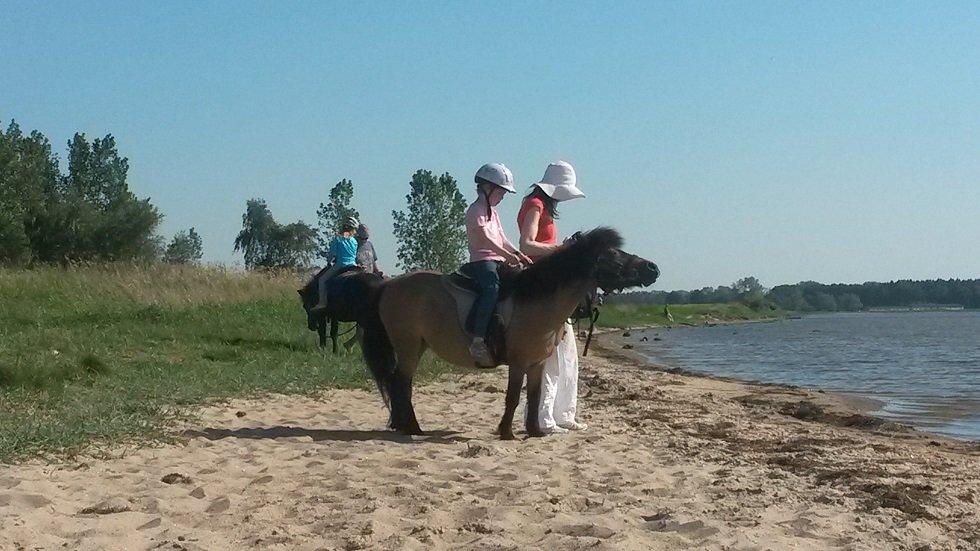 Ponyreiten am Salzhaff